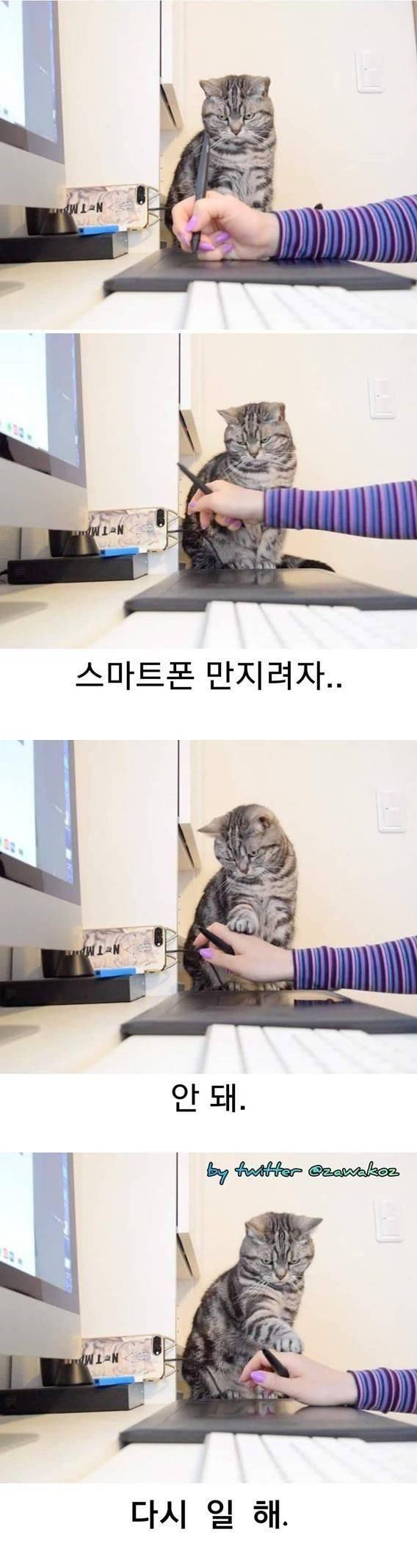 고양이재택근무감독관.jpeg