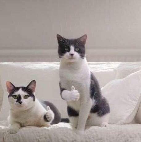 고양이 엄지 척