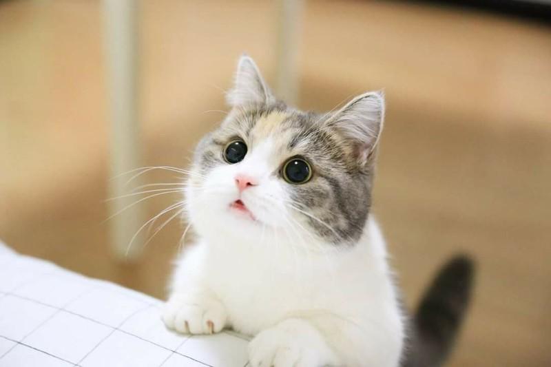 귀여운 동물 짤에 대한 이미지 검색결과